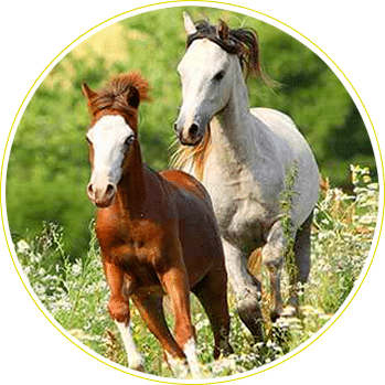 Country and equestrian properties for sale and rent