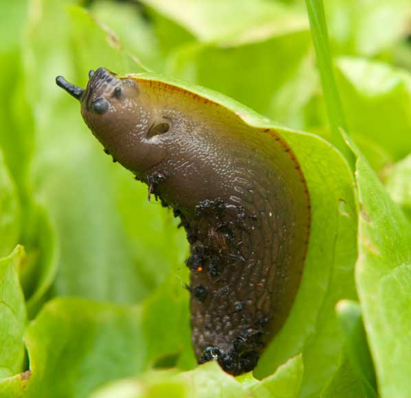 slugs-gardening-property-hampshire