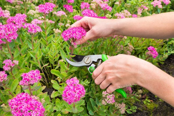 end-of-summer, garden-tips, dead-heading