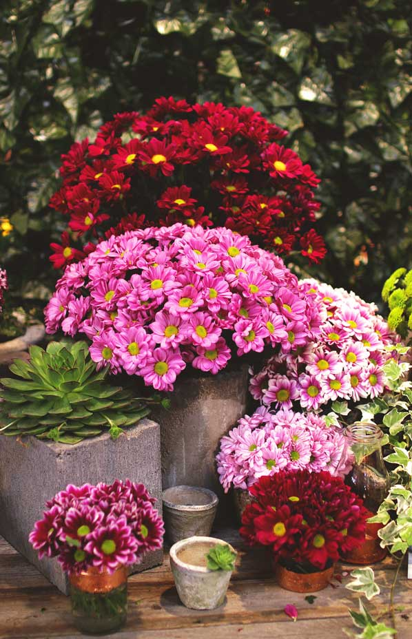 Perk up your patio this autumn and up the chances of selling your home as pots of tired summer bedding are tipped onto the compost heap to make way for autumn and winter flowers there are certain things you should do now to mightylinksfo