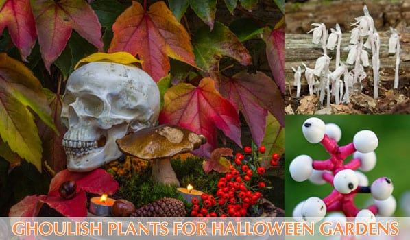 halloween garden design plants