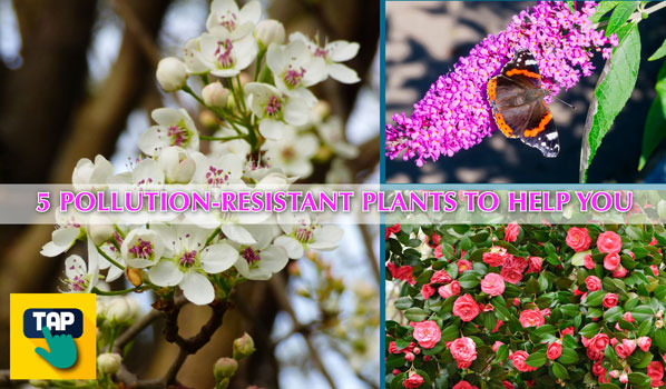 pollution resistant plants