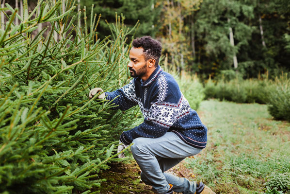 christmas trees grower