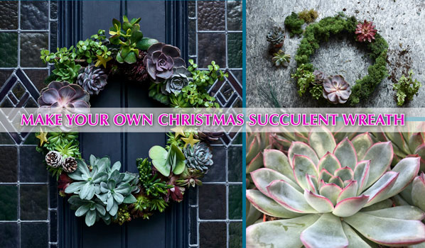DIY Christmas wreath succulents