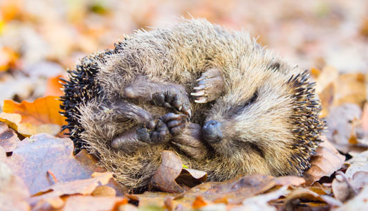 How to Give Wildlife a Helping Hand with Hibernation this Winter