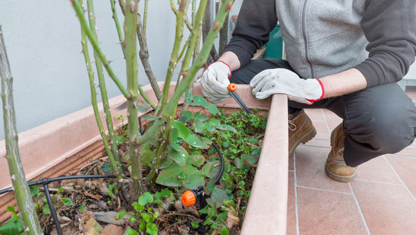 garden tips to save time