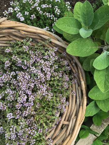 WHICH ARE THE BEST ANTIVIRAL HERBS TO GROW AT HOME?